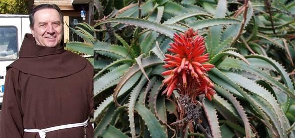 Recette Aloe Arborescens Pere Romano Zago